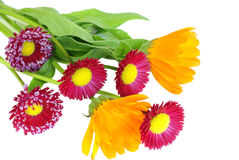 A bouquet of daisies and flowers of calendula Stock Image