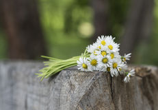Bouquet daisies Stock Photography