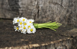 Bouquet daisies Royalty Free Stock Photography