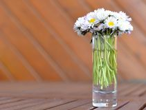 Bouquet of daisies. A bouquet of daisies in a glass vase Royalty Free Stock Photos