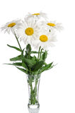 Bouquet of daisies in glass vase Royalty Free Stock Images