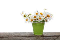 Bouquet of daisies in a green bucket Stock Images