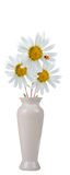 Bouquet of daisies and ladybird Stock Images