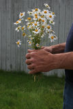 Bouquet of Daisies. Man holding a bouquet of daisies Royalty Free Stock Image