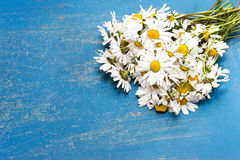 Bouquet daisies Royalty Free Stock Image