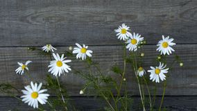 A bouquet of daisies near the wooden wall. royalty free stock photo