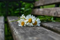 A bouquet of daisies on an old wooden bench stock photos