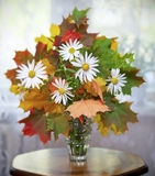 Bouquet of daisies Royalty Free Stock Images