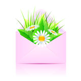Bouquet of daisies and plants Stock Photos