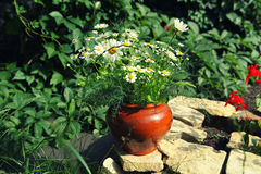 Bouquet of daisies in a pot on a stone slab Royalty Free Stock Photos
