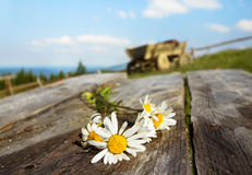 Bouquet of daisies on rustic table Stock Photos