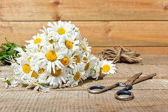 Bouquet of daisies, scissors and rope on wooden background Stock Images