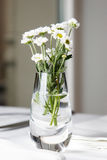 Bouquet of daisies standing in glass vase on white table. Shalow focus royalty free stock image