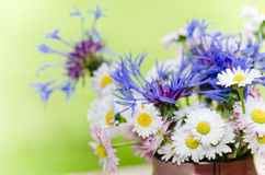 Bouquet of daisies. Summer background Royalty Free Stock Images