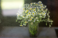 Bouquet daisies summer behind dirty glass on window sills. Behind glass, bouquet, clear vase, daisy, flowers, small flowers, summer, window sills Royalty Free Stock Photo