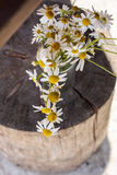 Bouquet of daisies  on wooden background Stock Images