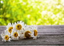 Bouquet of daisies Royalty Free Stock Image