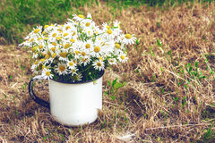 Bouquet of daisies on the yellow grass. Vintage composition. Stock Images