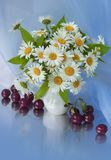 Bouquet of daisy. In a vase Royalty Free Stock Image
