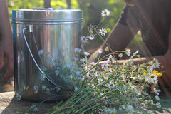 Bouquet of daisy-chamomile flowers in concrete pot. In the morning Stock Photography