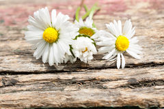 Bouquet of daisy flowers against nature background/ summer garde Stock Photos