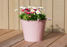 Bouquet of daisy flowers in a bucket Royalty Free Stock Photo