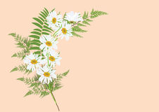 Bouquet of daisy flowers with fern leaves   drawing. On pastel  background color Royalty Free Stock Images
