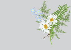 Bouquet of daisy flowers with fern leaves  isolated drawing. On pastel  background color Stock Photos
