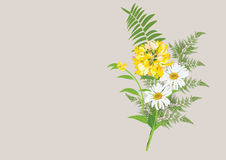Bouquet of daisy flowers with fern leaves  isolated drawing. On pastel  background color Stock Photo