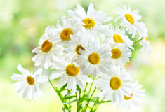 Bouquet of daisy flowers Stock Photo