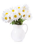 Bouquet of daisy flowers Royalty Free Stock Image
