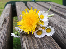 Bouquet with daisy flowers on a rusty bench Royalty Free Stock Photos