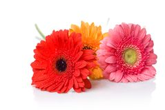 Bouquet from daisy-gerbera Stock Photos