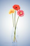 Bouquet from daisy-gerbera Royalty Free Stock Photos