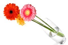Bouquet from daisy-gerbera in glass vase Stock Photos