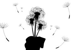 Bouquet of dandelions. In hand. Wind. Ease Royalty Free Stock Photo