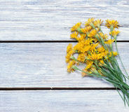 Bouquet of dandelions on the Stock Images