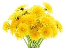 Bouquet of dandelions. Stock Photography