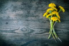 Bouquet of dandelions on dark wooden background Royalty Free Stock Photo