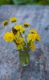 Bouquet of dandelions Stock Image