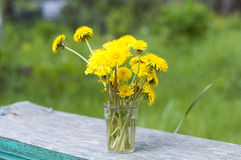 Bouquet of dandelions Royalty Free Stock Image