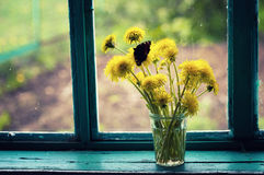Bouquet of dandelions Stock Photos