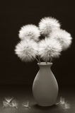 Bouquet of dandelions in vase. Bouquet of fluffy dandelions in vase on dark background. Sepia toned image Stock Image