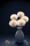 Bouquet of dandelions in vase Royalty Free Stock Photo