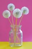 Bouquet of dandelions in vase Stock Photos