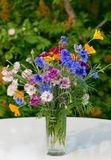 Bouquet of dark blue cornflowers Royalty Free Stock Images