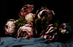 Bouquet of dark pink peonies. On a gray background Royalty Free Stock Photos
