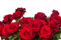Bouquet of dark  red roses  close up Stock Photography