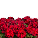 Bouquet of dark  red roses  close up Stock Image