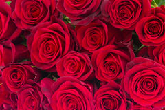 Bouquet of dark red roses Stock Photography